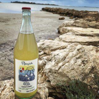 Drinking a glass of Allé Catarratto Zibibbo by the sea, on the Marsala salt pans... Exciting! 🤗😍  USA National Importer 🇺🇸  ➡️ @vinotas_selections ⬅️  Rebellious Wines 🌿🍷 ______________________ www.flaviawines.com  #catarratto #zibibbo #sicily #terroirs  #organic  #natural  #wines #wine #vino #winelover #withewine #winery #winelovers #instawine #unitedstates  #whitewine #winestagram #vineyard #usa  #wines #marsala #winelife #california #newyork  #winemaker #biologico #vinobianco #italianwines #etnawine #naturalwine